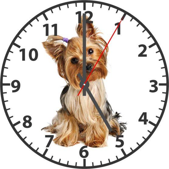 Yorkshire Terrier CD Clock
